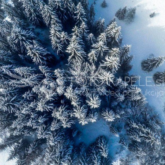 Zasnežen gozd. Kočevsko