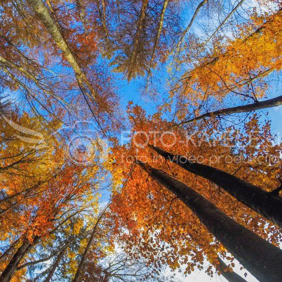 očevski gozdovi, Kočevsko