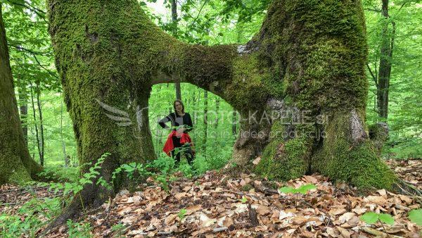Pogled skozi drevo, Kočevsko